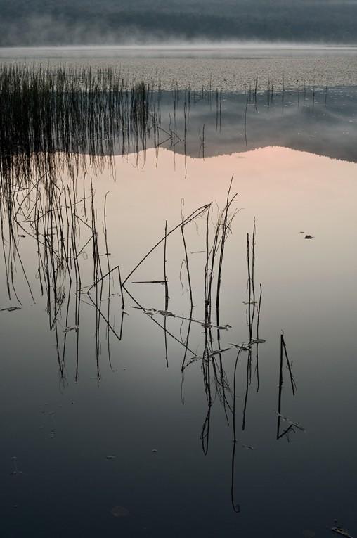 Reeds_Dawn